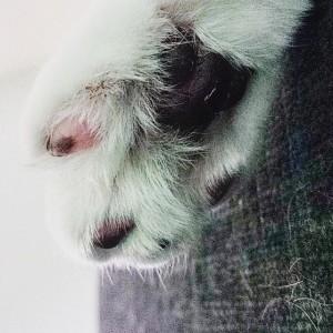 haru_beans